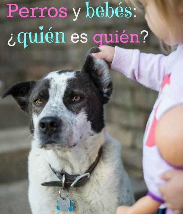 Niña levanta la oreja al perro