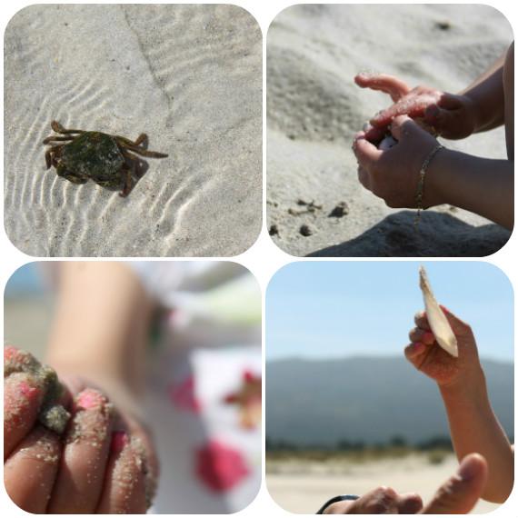 tesoros para niños en la playa