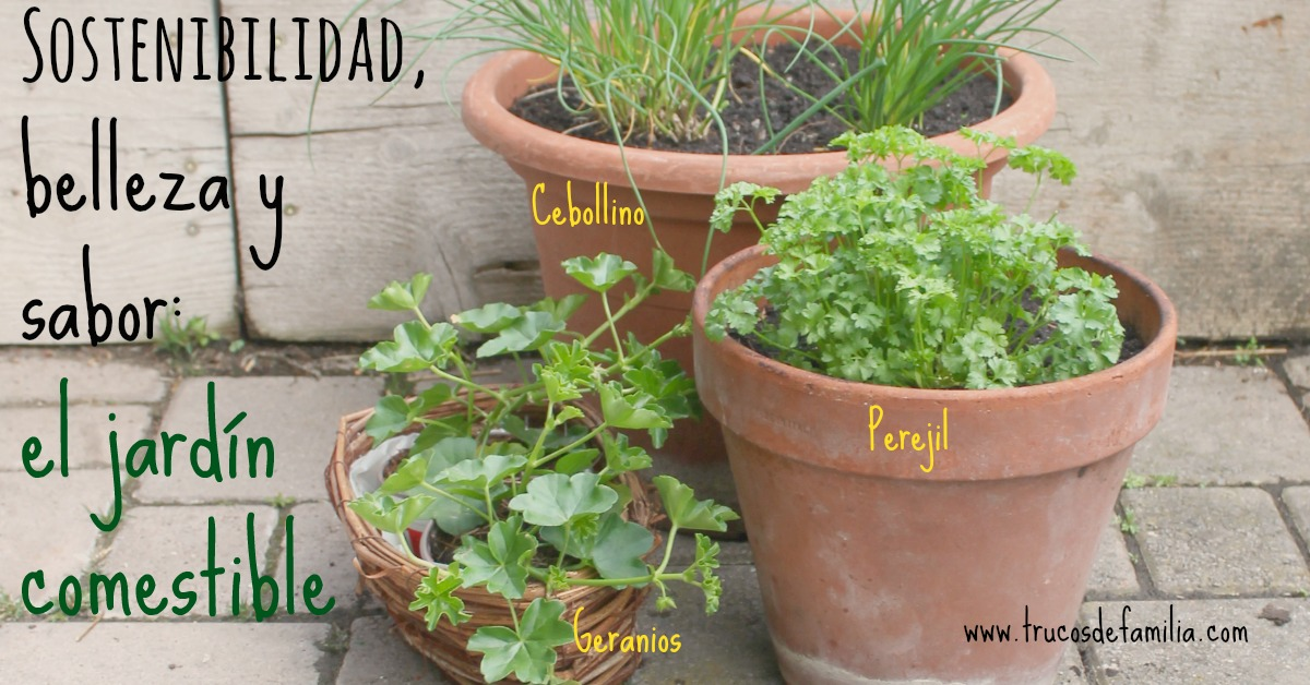 Sostenibilidad belleza y sabor- el jardín comestible