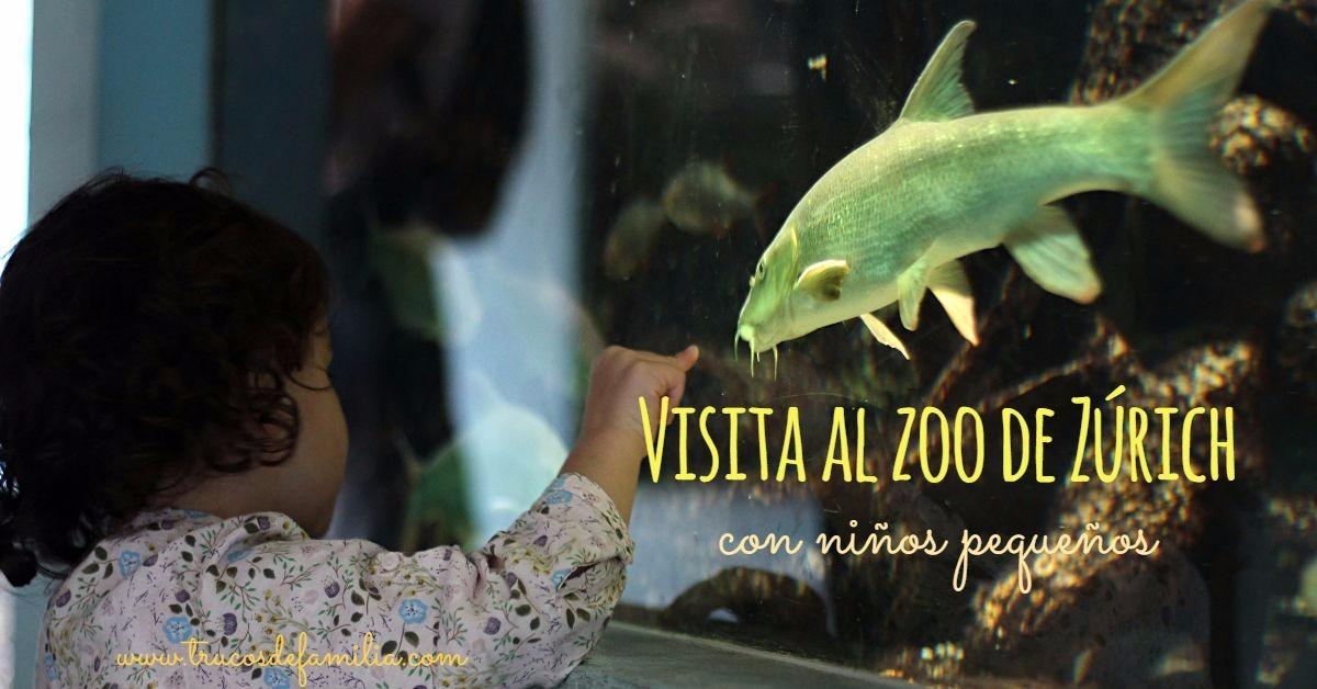 visita al zoo de zurich